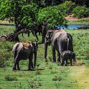 zelle-safari1-1